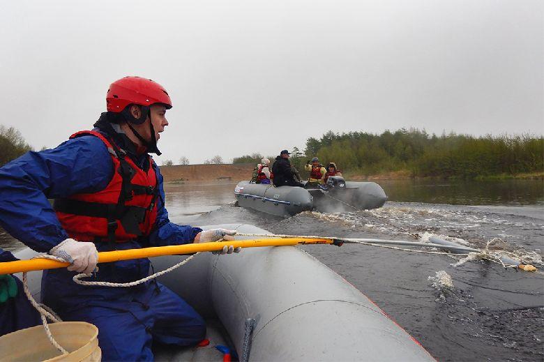 Участники практиковали методики замедления кита, при этом соблюдая правила приближения к запутанному животному