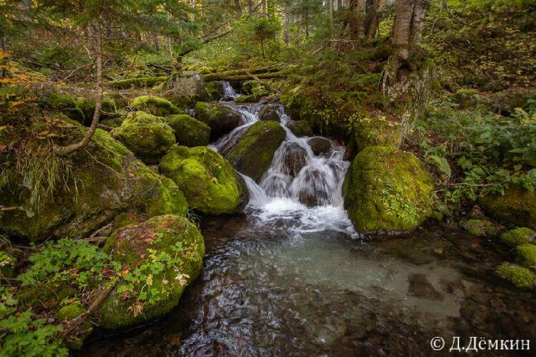 Запретить «Горному воздуху» рубить лес на горе Острой