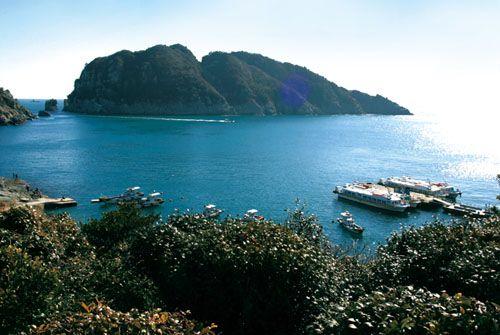 Цветение деревьев тонбек на острове Хедымкан, известном как «Бриллиант Южного моря» (фото еженедельника «Конгам»)