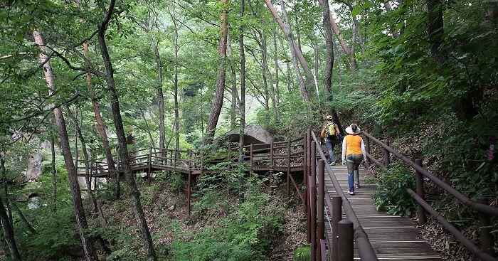 Соригиль или «Тропа звука», ведущая к храму Хэинса, дает туристам возможность стать ближе к природе