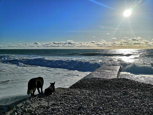Собачий рай у моря