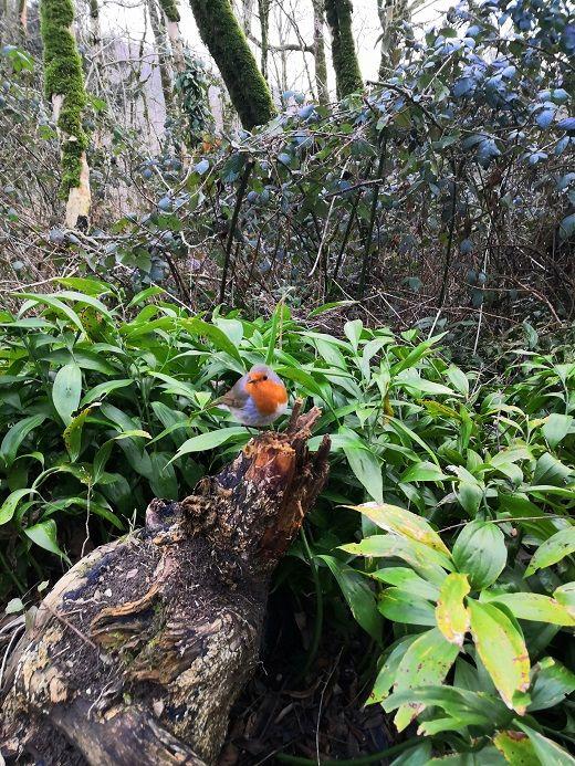 Маленькая рыжегрудая очень любопытная птичка, возможно это был рыжегрудый поползень