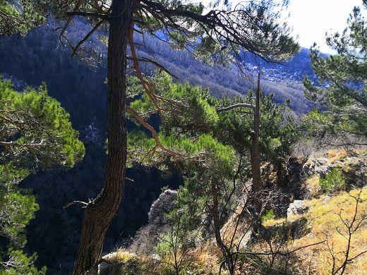 Вершина покрыта хвойным лесом