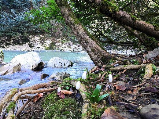 Сосульки чередуются с подснежниками и лесными фиалками